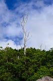 Árbol muerto solo en fondo del cielo Fotos de archivo