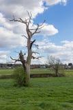 Árbol muerto todavía que se coloca en el campo Foto de archivo