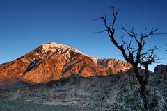 Árbol muerto y la montaña Imagen de archivo libre de regalías