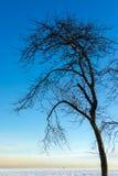 Árbol muerto y lago congelado Fotos de archivo