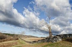 Árbol muerto y pared de piedra Imágenes de archivo libres de regalías