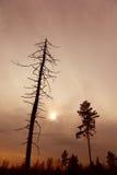 Árbol muerto y un árbol vivo en la puesta del sol, imagen entonada Fotografía de archivo libre de regalías