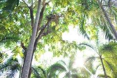 Árbol natural Foto de archivo