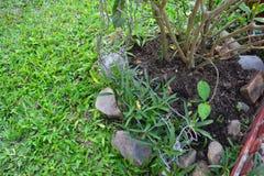 Árbol natural Fotos de archivo