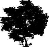 Árbol negro Imagenes de archivo