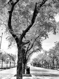 Árbol negro fotografía de archivo