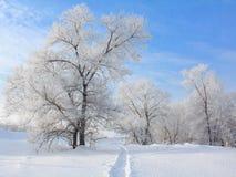 Árbol nevado Fotos de archivo