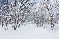 Árbol nevado Fotografía de archivo