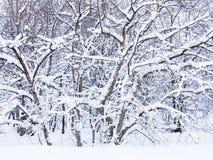 Árbol nevado Foto de archivo libre de regalías