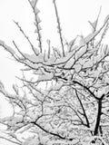 Árbol nevado Fotografía de archivo libre de regalías
