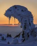 Árbol nevado del ingenio de la puesta del sol imágenes de archivo libres de regalías