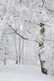 Árbol Nevado en el parque del invierno Fotografía de archivo libre de regalías