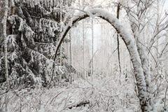 Árbol Nevado en invierno Imagenes de archivo