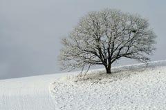 Árbol nevado en la ladera Foto de archivo