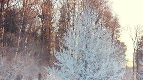 Árbol nevado en parque del invierno Escena del invierno Ramas Nevado del árbol en parque almacen de video