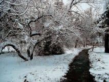 árbol nevoso Imagen de archivo