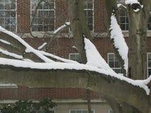 árbol Nieve-pintado Fotos de archivo