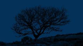 Árbol nudoso en Rocky Landscape At Night almacen de metraje de vídeo