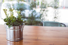 Árbol o planta verde en potes del metal plateado en la tabla de madera Fondo Imágenes de archivo libres de regalías