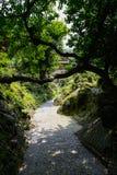 Árbol oblicuo en jardín de rocalla por la trayectoria de la piedra del adoquín en verano soleado Imagenes de archivo