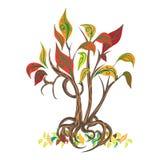 Árbol ornamental con las raíces Fotografía de archivo