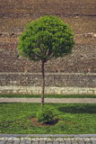 Árbol ornamental y pared de ladrillo medieval Imagenes de archivo