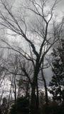 Árbol oscuro alto Foto de archivo libre de regalías