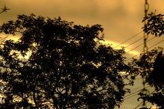 Árbol oscuro en la puesta del sol Imágenes de archivo libres de regalías