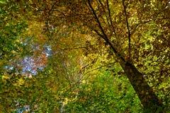 Árbol otoñal fotos de archivo libres de regalías