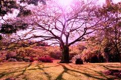 Árbol púrpura Imagenes de archivo