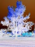 Árbol púrpura Foto de archivo