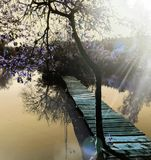Árbol púrpura fotografía de archivo