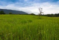Árbol-paisaje Foto de archivo