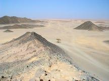 Árbol pasado delante del desierto Fotos de archivo libres de regalías