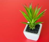 Árbol plástico del arbusto en un plantador de cerámica Imagenes de archivo