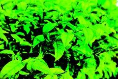 Árbol, plantas, bosque y flores hermosos del verde de la hoja en los jardines y los parques al aire libre fotografía de archivo