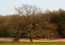 Árbol poderoso Foto de archivo
