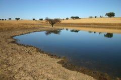 Árbol por el agua fotos de archivo