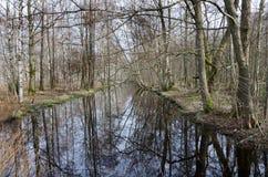 Árbol por el agua Imagen de archivo