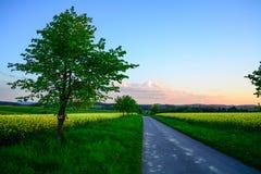Árbol por el borde de la carretera Foto de archivo