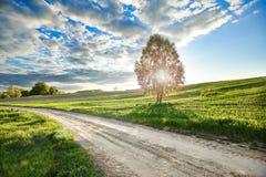 Árbol por el camino fotos de archivo libres de regalías