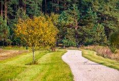 Árbol por el camino Imagen de archivo libre de regalías