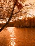 Árbol por el lago Fotografía de archivo