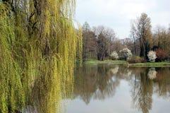 Árbol por el lago Fotos de archivo