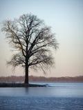 Árbol por el lago Foto de archivo