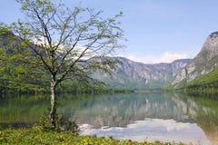 Árbol por el lago Imagen de archivo libre de regalías