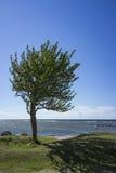 Árbol por el mar Imagenes de archivo