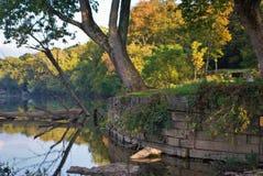 Árbol por el río Fotografía de archivo