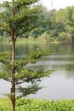 Árbol por el río Imagen de archivo libre de regalías