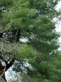 Árbol por la cala Imagen de archivo